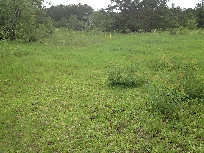 2 Hilcorp 1 New Grass.JPG