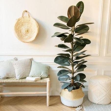 Paisagismo sagrado: Saiba 7 dicas para plantar e ativar a energia da natureza em casa