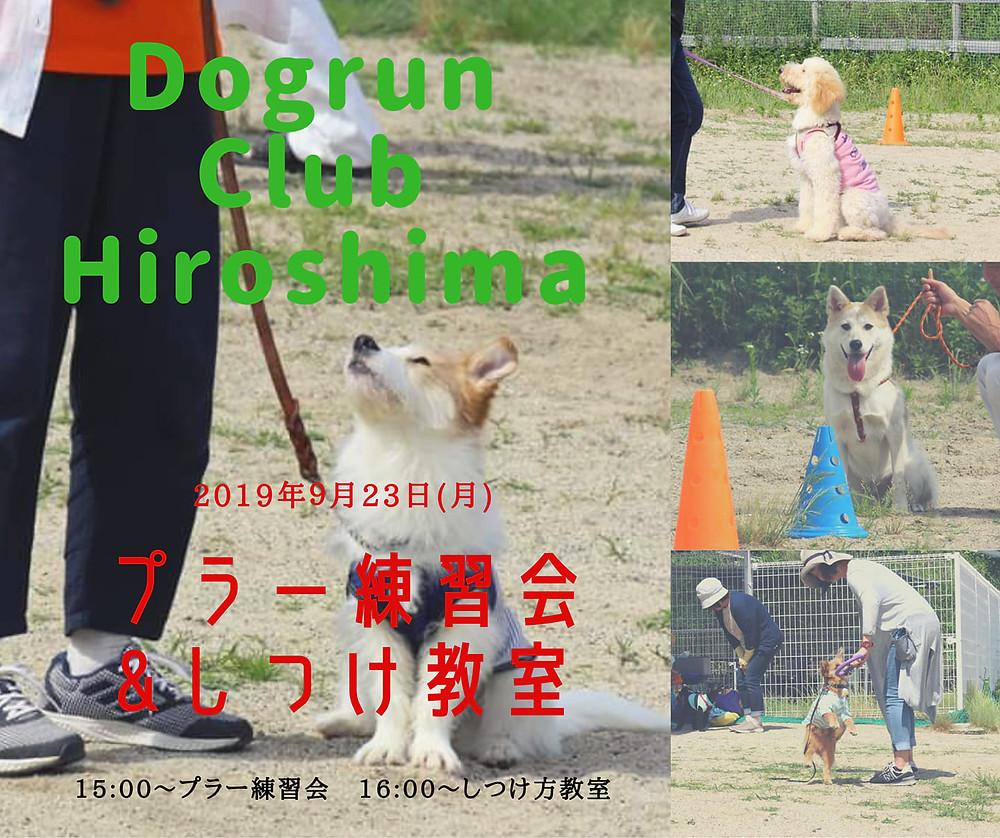 ドッグランクラブ広島 しつけ教室 プラー練習会