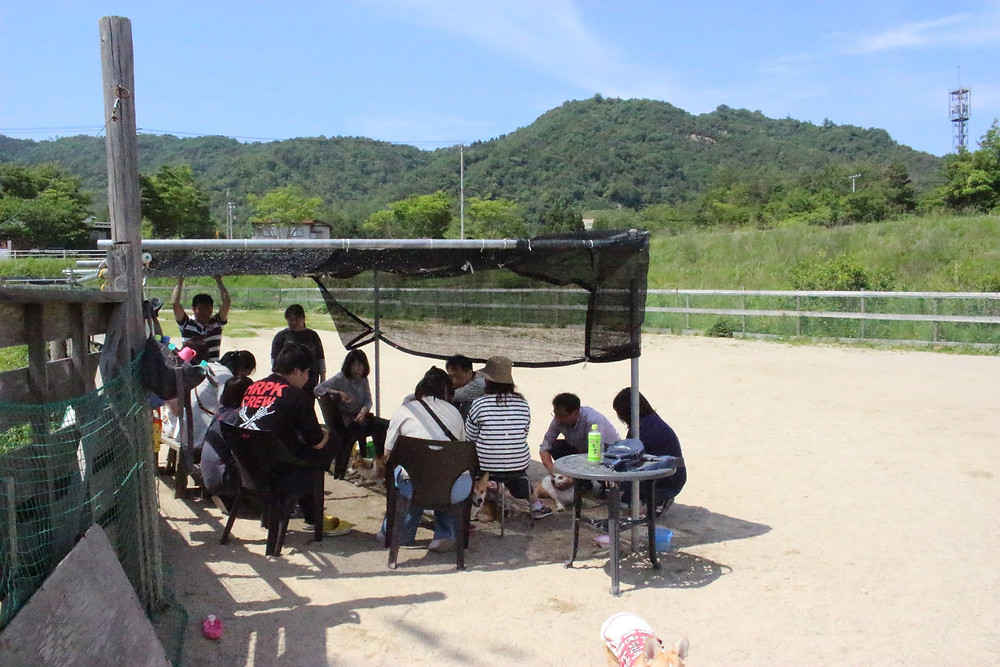 コーギーオフ会の様子 ドッグランクラブ広島 会員制 ドッグラン