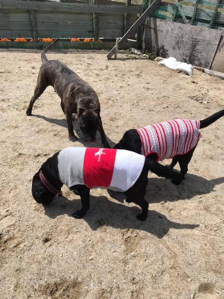 ドッグランクラブ広島 東広島 呉 犬 しつけ教室