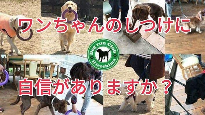ドッグランクラブ広島 犬 しつけ教室 会員制ドッグラン