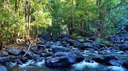 Hidden beauty in the jungle