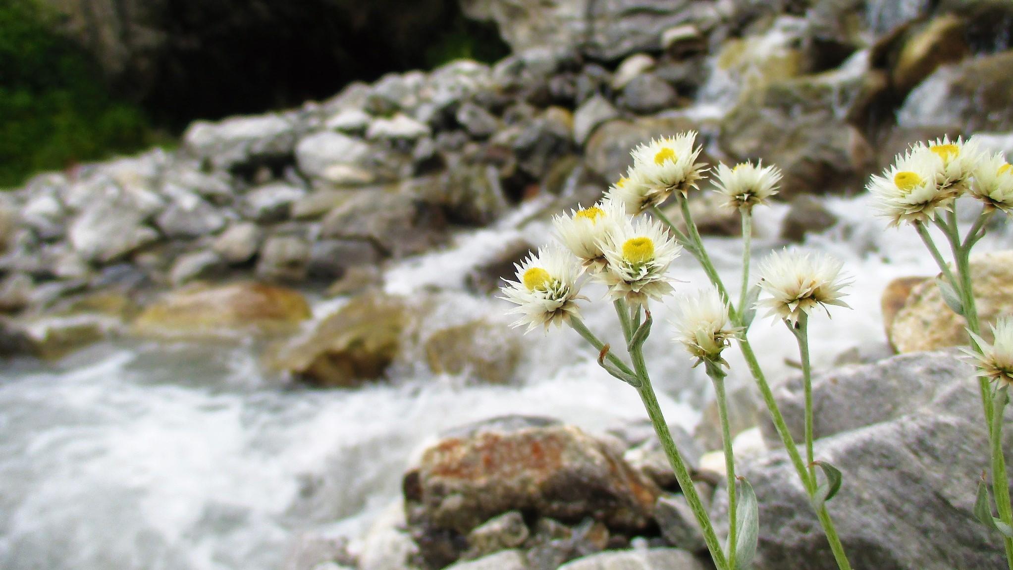 Nature - Pure & Close