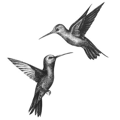 Humming Birds Greetings Card