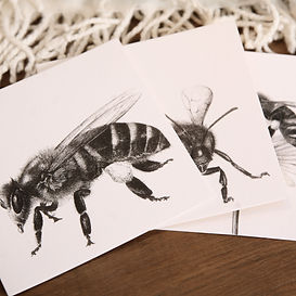 Nature Greetings Cards