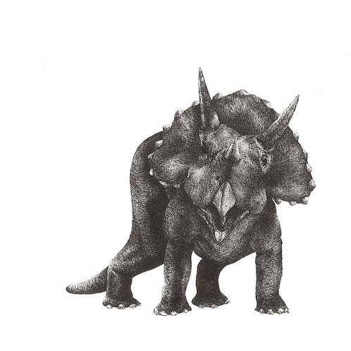 Triceratops Greetings Card