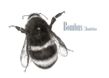 bumble bee 8.5.5 011.jpg