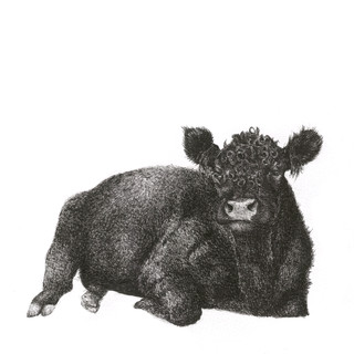 sleepy cow 20 x20.jpg
