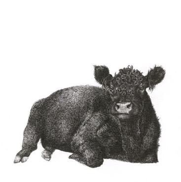 sleepy cow 20 x20.jpg