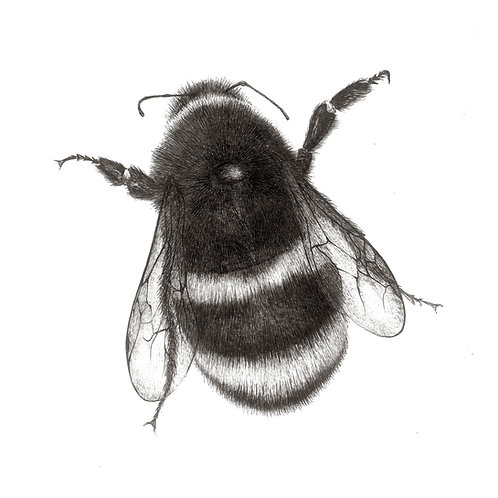 Fuzzy Bumble Bee Greetings Card