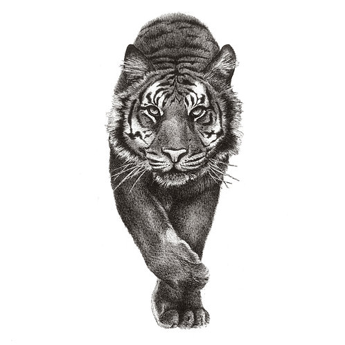 Stalking Tiger Print