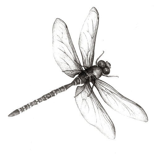 Whizzing Dragonfly