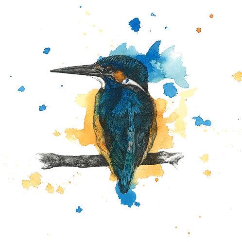 Sitting Blue Kingfisher Print