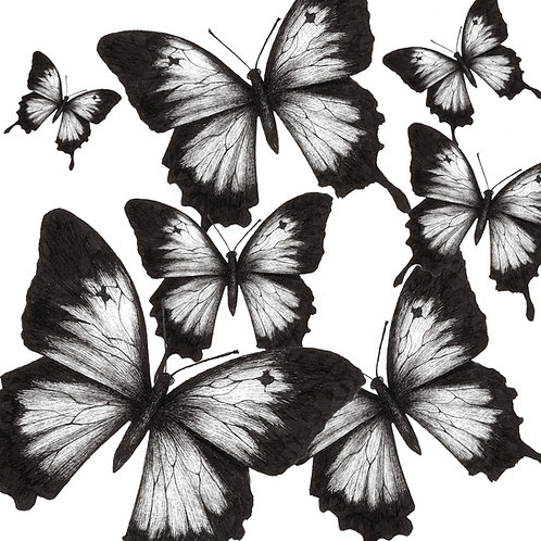 Black Tipped Butterflies Print