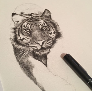 Tiger commision
