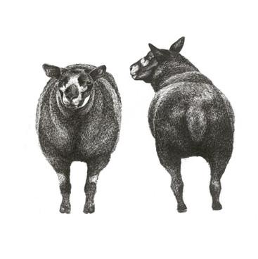 ffront and back sheep 20 X 20CM.jpg