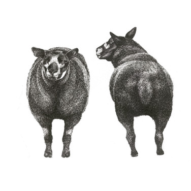 ffront and back sheep 20 X 20CM.jpg