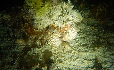 Nigth Snorkeling Riviera Maya