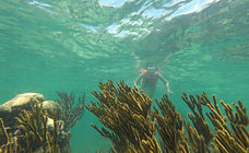 Reef Snorkeling Adventure Tulum