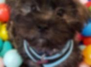 M.A.D Dog Club Puppy Training