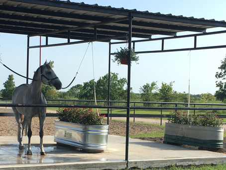 Why is finding a boarding facility for your horse like shopping for a new car?
