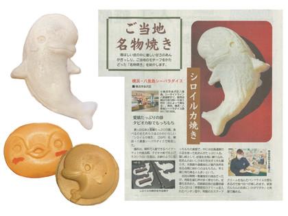 【神奈川新聞に「イルタン焼きのシロイルカ」が掲載されました!】