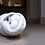Thumbnail: Tiny Shrunken Roommates: Coexisting