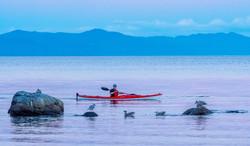 Kayaking,-Point-Holmes