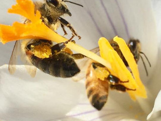 Bees - Help our honey bees early in the spring