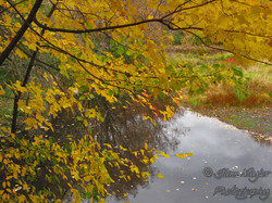Fall by the pond, Ontario