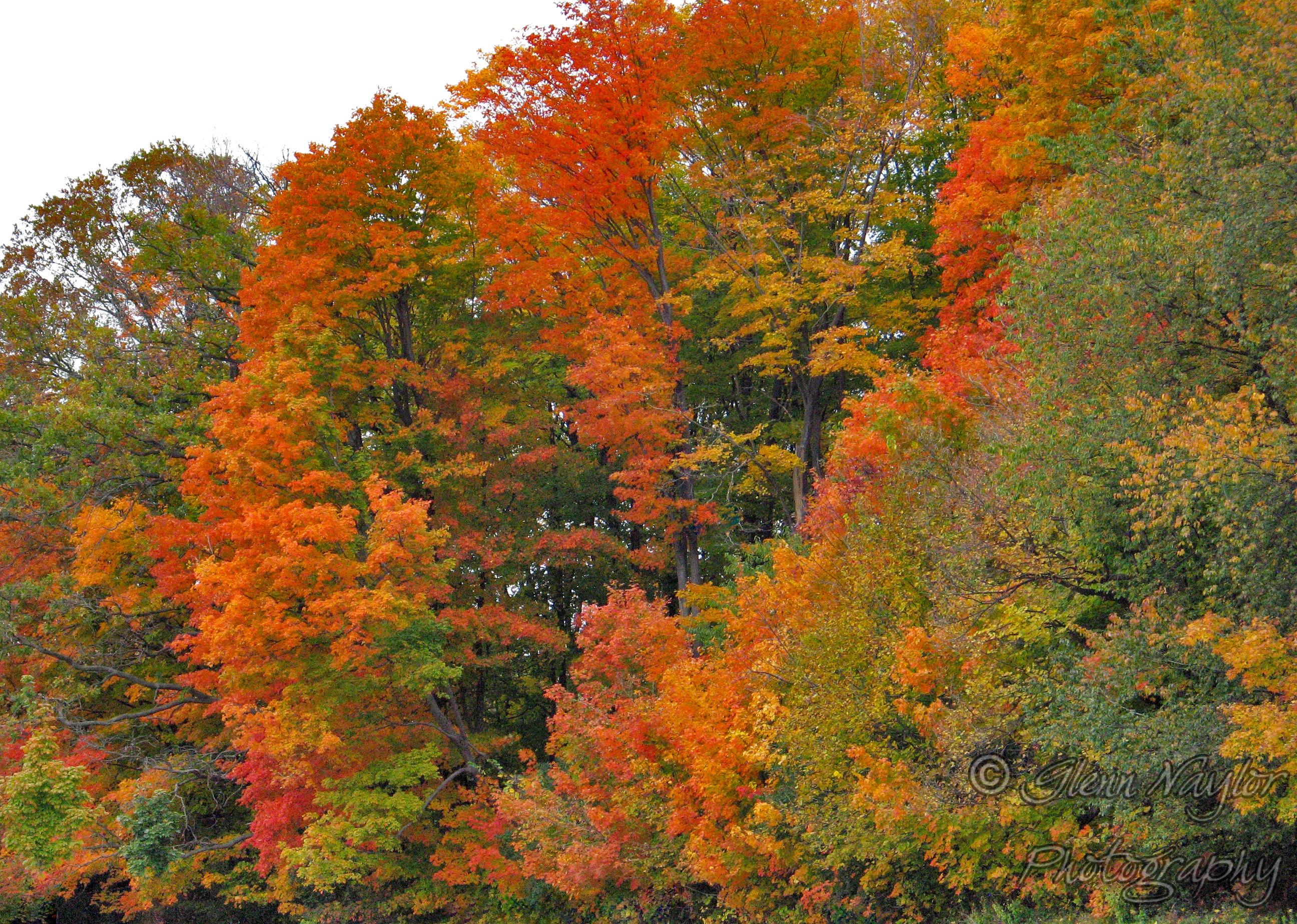 Fall trees, Ontario