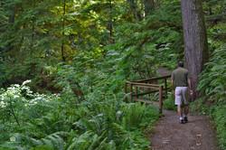 Seal Bay Nature Park Trail