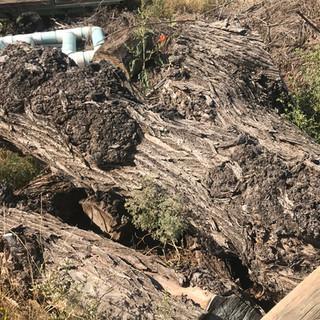 Stump Four