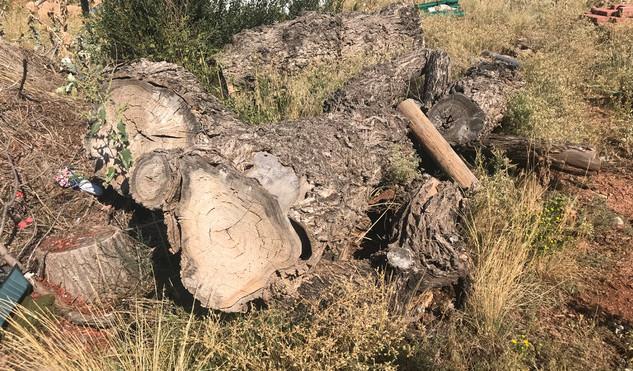 Stump Two