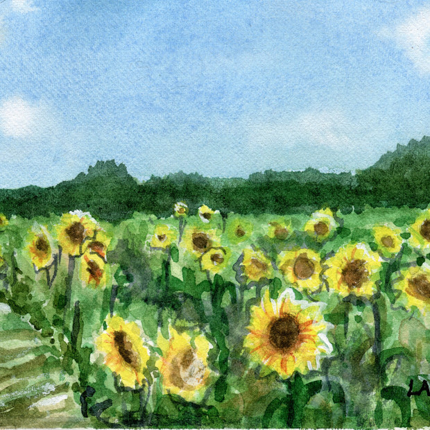 Sunflowers at Dix