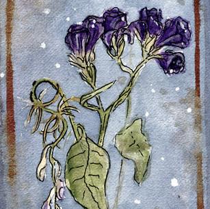 Purple Flower Vibes
