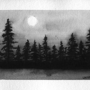 Old Photogragh- Forest