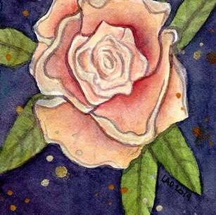 Reach Rose