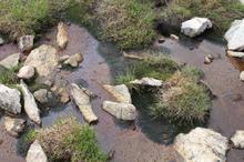 Site 37 Fen Pond