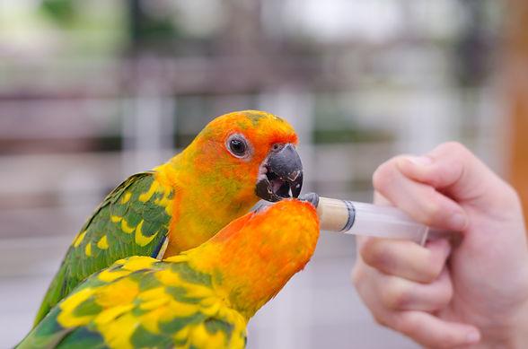 Feeding Parrots.jpeg