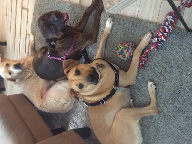 Logan, Ruby & Luna