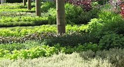 B & Q Garden  (7)