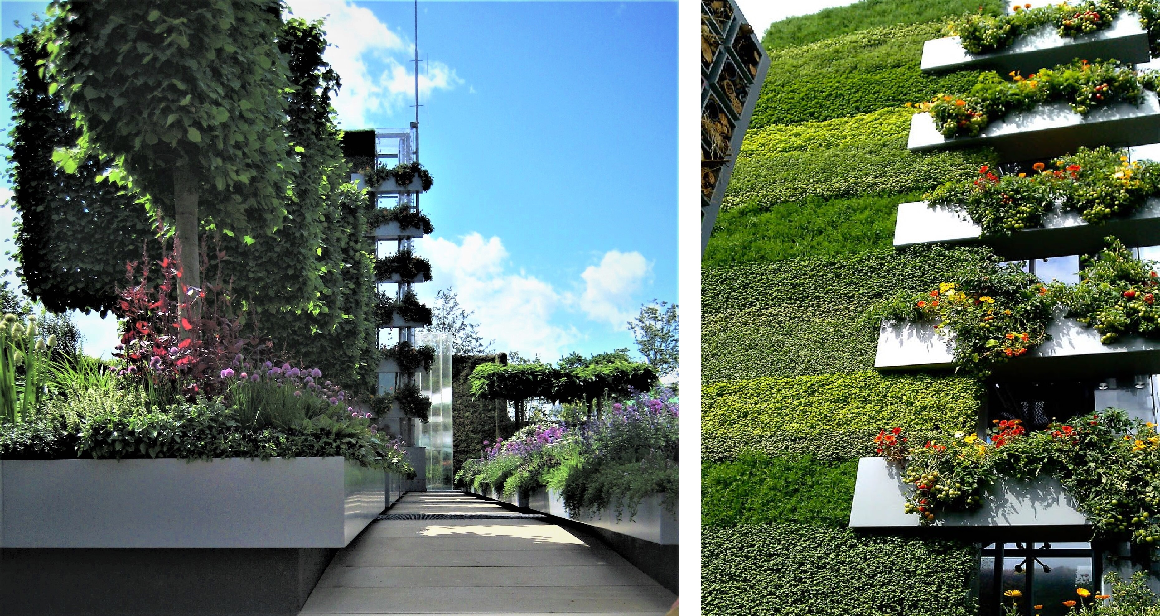 B & Q Garden  (3)