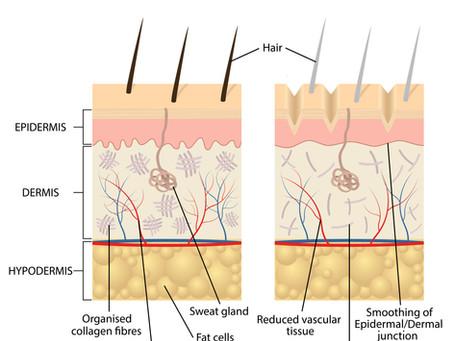 Wat gebeurt er met de afweer in de ouder wordende huid