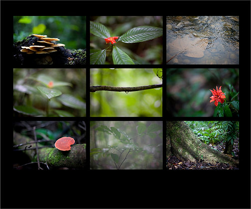 Amazon Jungle Collage
