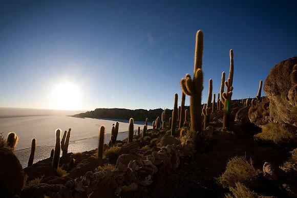 Salt Flats Cactus, Salar uyUni