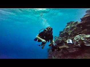 Brookie_diving1-2.jpg