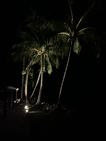 Commercial_Island Resorts_ Specialist exterior Lighting