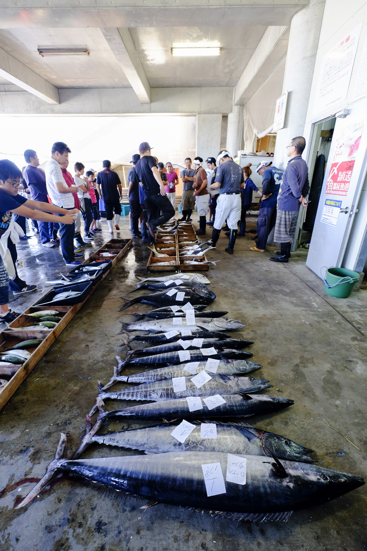 Fish Auctions - Okinawa